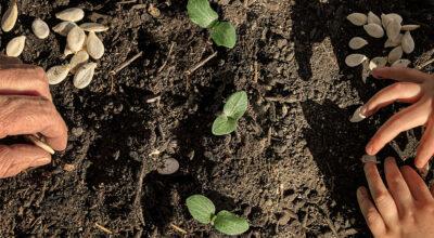 semillas heirloom manos de sisi